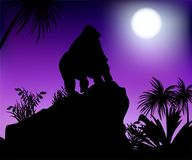 Gorilla under the moon. Gorilla looks at the moon standing on a rock vector illustration Royalty Free Stock Photos