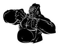 Gorilla Vector Illustration Stock Photos