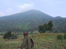 Gorilla-Wanderung Lizenzfreies Stockfoto