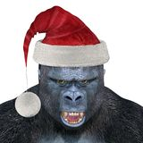 Gorilla Wearing Santa Hat Stock Images