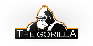 Gorilla. On a white background. Vector  with room for text Royalty Free Stock Image