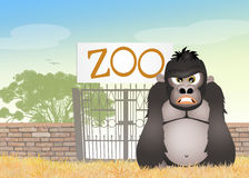 Gorilla in the zoo Stock Images