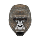 Gorillaangy Hauptgesicht Stockfoto