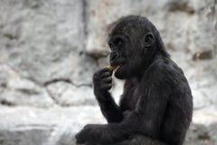Gorillababy lizenzfreie stockfotos