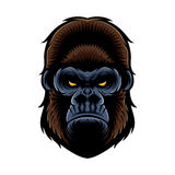 Gorillahuvud Arkivbilder