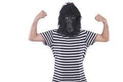 Gorillamann Stockbild