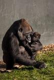 Gorillamodern och behandla som ett barn Arkivbild
