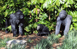 Gorillas Royalty Free Stock Photography