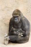 Gorille contemplatif Photo stock