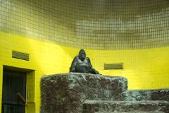 Gorille dans le zoo photographie stock libre de droits