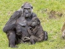 Gorille de mère avec son bébé photo libre de droits