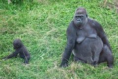 Gorille de mère et de chéri Photo libre de droits