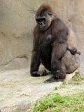 Gorille et chéri de terre en contre-bas Image stock