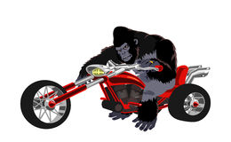 Gorille sur le vélo rouge Images libres de droits