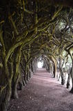 Gormanston's Cloisters Stock Images
