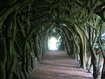 Gormanston's Cloisters Royalty Free Stock Photography