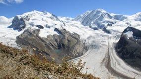 Gornergrat Summith Vista del ghiacciaio e fiori selvaggi fotografia stock