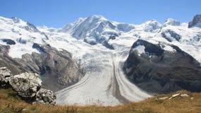 Gornergrat Summith Vista del ghiacciaio e fiori selvaggi di estate fotografia stock