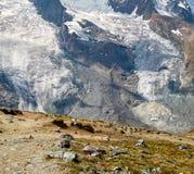 Gornergrat Zermatt, Svizzera, alpi svizzere Fotografie Stock Libere da Diritti