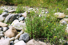 Gorny Altai Photographie stock libre de droits