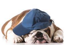 Gorra de béisbol que lleva del perro imagenes de archivo
