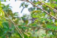 Gorrión de casa encaramado en una rama de árbol Imagen de archivo