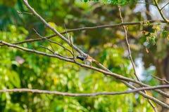 Gorrión de casa encaramado en una rama de árbol Foto de archivo