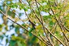 Gorrión de casa encaramado en una rama de árbol Fotografía de archivo