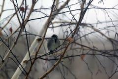 Gorrión en el árbol Imagen de archivo