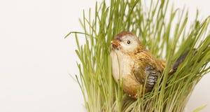 Gorrión en la hierba Fotografía de archivo libre de regalías