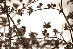 Gorrión en un árbol Fotografía de archivo