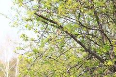 Gorrión en un árbol Foto de archivo libre de regalías