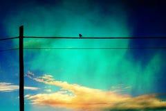 Gorrión en un cable Foto de archivo libre de regalías