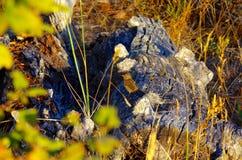 Gorrión en un inicio de sesión resistido de la madera de deriva el último sol Foto de archivo libre de regalías
