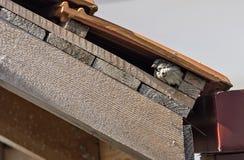 Gorrión en un tejado del edificio Imagenes de archivo