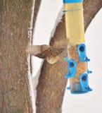 Gorrión en vuelo con la semilla Imagen de archivo libre de regalías