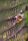 Gorrión eurasiático joven en la cerca Foto de archivo libre de regalías