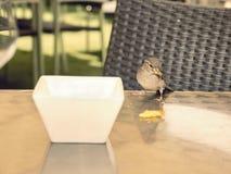 Gorrión hambriento en una tabla que come los restos Imagen de archivo