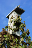 Gorrión que se sienta en el tejado de la pajarera. Imagenes de archivo