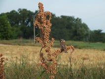 Gorrión que se sienta en rama de árbol imagen de archivo