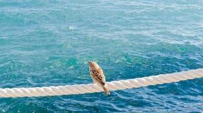 Gorrión solo en el mar cercano de memoria Fotografía de archivo libre de regalías