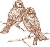 Gorriones Imagen de archivo libre de regalías