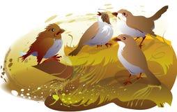 gorriones Imagen de archivo