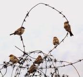 Gorriones en el alambre Imagenes de archivo