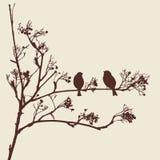 Gorriones en una ramita Foto de archivo