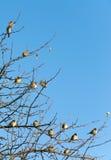 Gorriones encaramados en ramas de un árbol Fotos de archivo libres de regalías