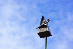 Gorriones que se sientan en una pajarera triangular Imágenes de archivo libres de regalías