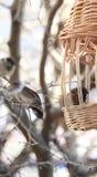 Gorriones subidos en el canal Fotos de archivo libres de regalías