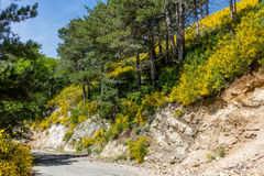 Gorse in the Aspromonte Royalty Free Stock Photography