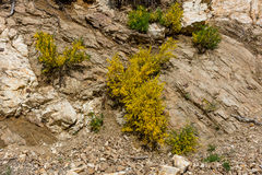 Gorse in the Aspromonte Stock Images